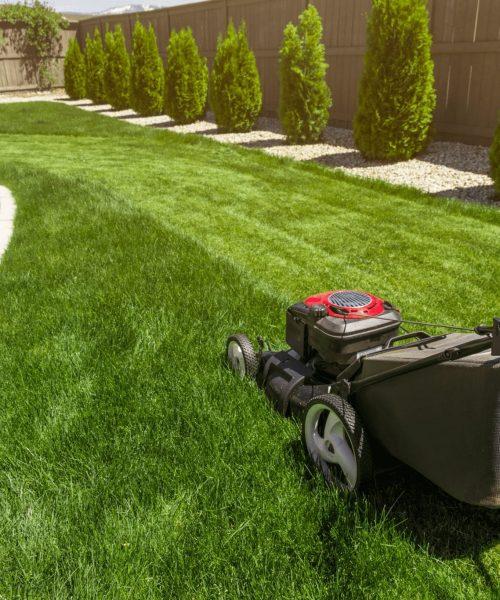 fix-my-garden-lawn2